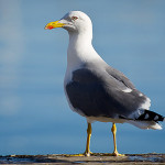 Gull Sea Port Garrucha Almeria Spain